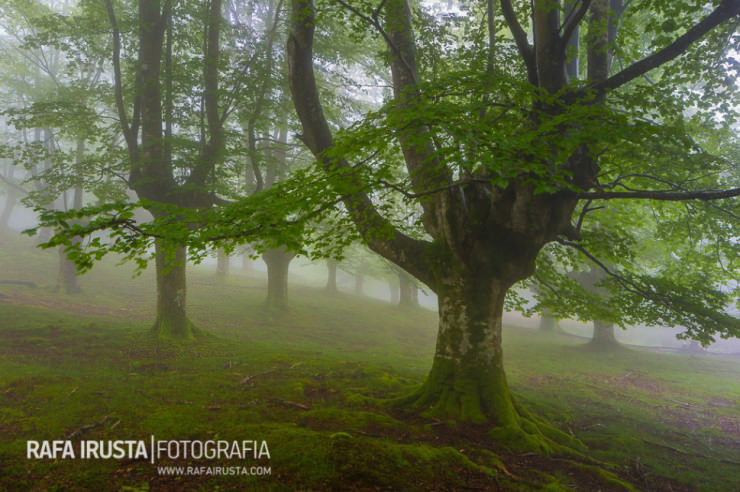Gorbea-Photo-by-Rafa-Irusta2-740x492