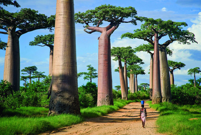 Top-10-Streets-Baobab-Photo-by-Todd-Gustafson