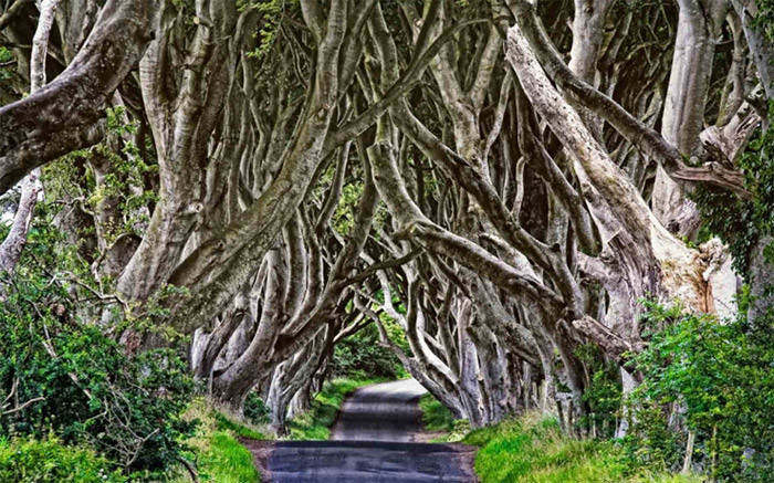 Top-10-Streets-Dark-Hedges-Photo-by-Maurizio-Rellini-740x462
