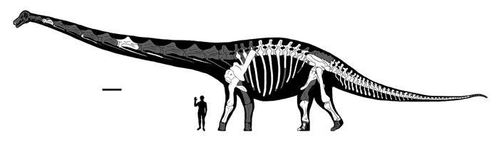 Dreadnoughtus Completeness Reconstruction