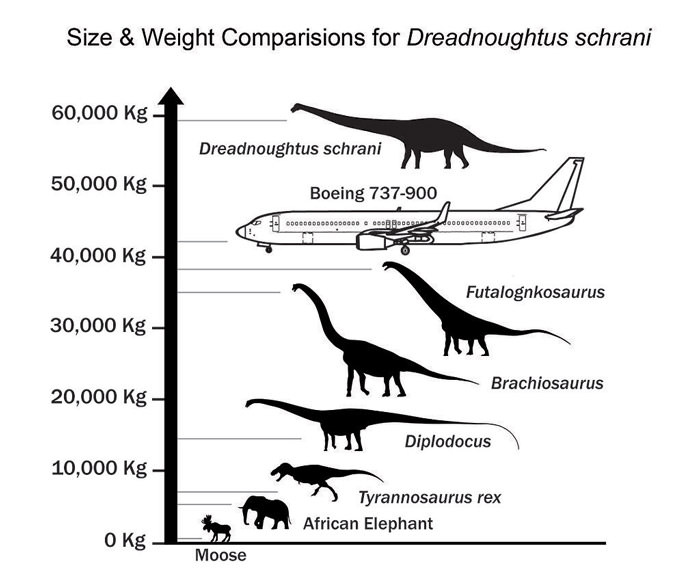 Dreadnoughtus Size  Weight Comparision Metric JPG