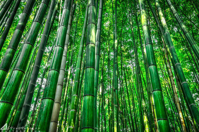 Top-10-Streets-Bamboo-Photo-by-Structuresxx